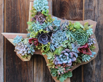 Texas State Succulent Living Creations™ Hanging Planter