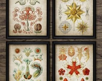 Vintage Haeckel Print Set of 4 - Marine Biology Home Decor - Haeckel Poster - Printable Art - Set Of Four Prints #288 - INSTANT DOWNLOAD