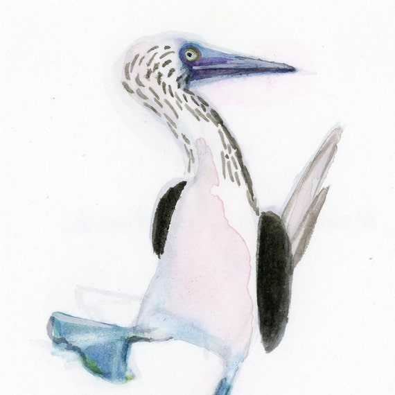 "Blue Footed Booby - Watercolor - 4"" x 4 1/2"""