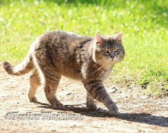 Outdoor Feral Cat Photography | Feline Pic | Wildlife Wall Art | Animal Home Decor | Gray Pet Cat | Feral Kitten Photo Gift | Cat Art Print