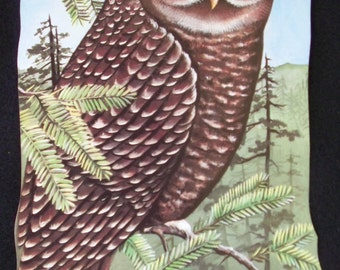 Spotted Owl Lightswitch Cover