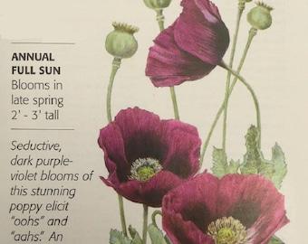 Lauren's Grape Poppy Seeds - .20 grams - Botanical Interests
