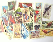 Tropical Birds collector cards: pack of 30 Brooke Bond Tea cards from 1961. Collectible or for use in crafts, scrapbook, journal OT365
