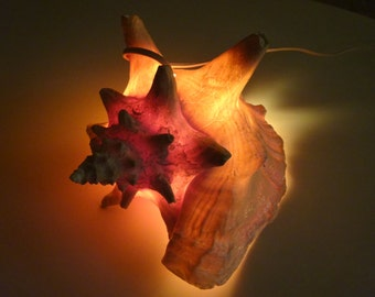 Conch Shell Sea Lamp/Night Light, Vintage Ocean Shell Lamp,   FREE SHIPPING