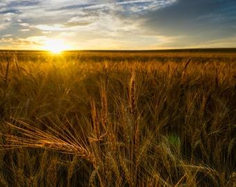 Sunrise Over Wheat Field in Rural America: An Archival Pigment Fine Art Print