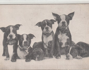 Antique Postcard With 6 Boston Terrier  Dogs And Advertising From Meade's Shoes Brooklyn,NY