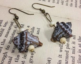 Eucalyptus Seed Pod Earrings