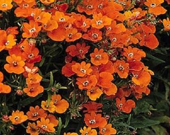 Orange Prince Nemesia Flower Seeds / Strumosa / Annual  50+