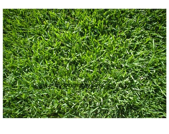 Plants,grass lawn,thick, green,home, instant print,real estate,gardening,digital background,yard,meadow, sod,park,golf course,