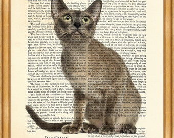 Tonkinese Cat DICTIONARY ART PRINT on Vintage Dictionary Page 10'' x 8'' from Antique Book
