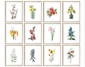 Botanical Art Print SET of 12. flowers, colorful, garden prints, garden art, botanical plates, botanical chart, floral wall art, flower 8x10