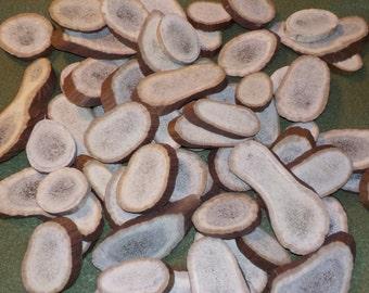Elk Antler Pieces, 60+ count!