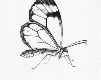 "Glass Winged Butterfly - 4"" x 6"" Print"