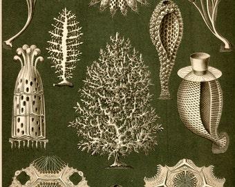 Sea Sponges, Scientific Illustration, Sponges Sea, Sea Illustration, Illustration Scientific, Illustration Sea, Ernst Haeckel, Haeckel Ernst