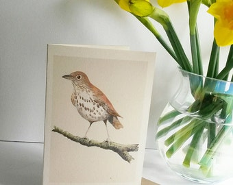 Hand painted image of a Song Thrush printed on recycled card with a recycled envelope