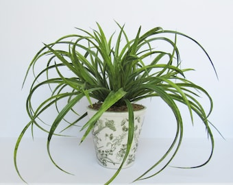 Artificial Greenery Arrangement - Green - Artificial Flowers - Toile Vase