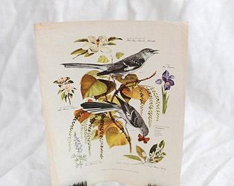 Botanical Bird Print