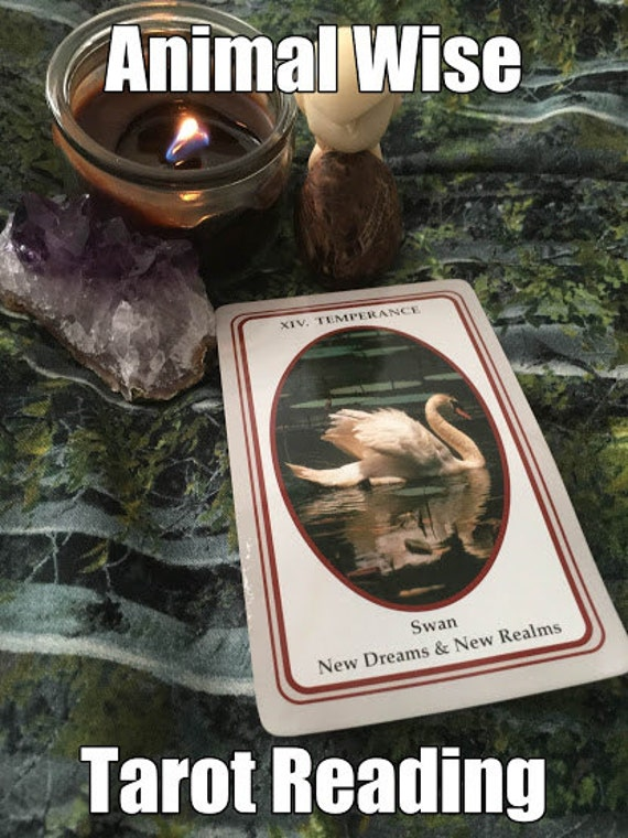 Animal Tarot Cards: ANIMAL Wise Tarot Reading By TarotBagBoutique On Etsy