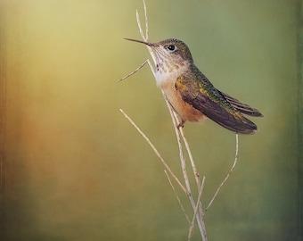 Hummingbird, Hummingbird Photo, Southwest Art, Fine Art Photography, Hummingbird Art, Green, Blue, Yellow