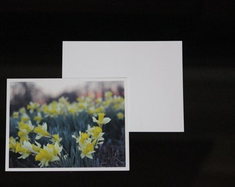 Photo notecards blank daffodils