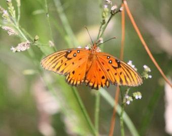 Beautiful Butterfly...