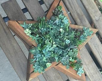 Star Succulent Wall Art
