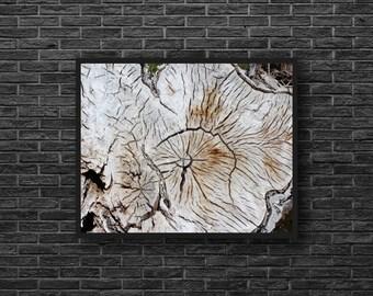 Wood Structure Photo - Wood Texture Print - Wood Photography - Stump Photo - Grey - Nature Wall Decor - Zen Photo - Feng Shui Wall Decor