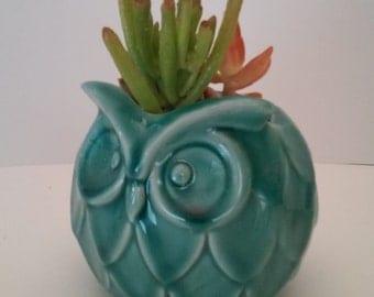 Aqua Owl Succulent Planter