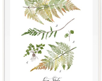 Fern Study Vol.2 - Scientific illustration. Beautifully textured cotton canvas art print. Order as a 5x7 8x10 11x14 or 16x20 size.