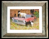 "GTO Goats Art ""GTO Goats"" Barn Wood Framed/Matted Signed and Numbered"
