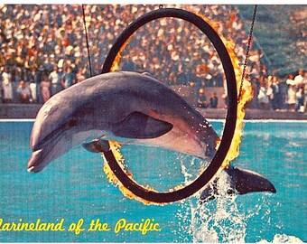 Vintage California Postcard - Marineland of the Pacific (Unused)