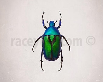 Beetle, Emerald Green Beetle, Electric Blue, Nature Photography, Insect Print, Boy Nursery Art, Green Beetle, Oddity