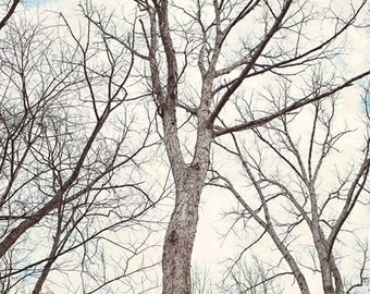 Nature art, tree photography, nature bedroom prints, rustic photography, tree pictures, nature prints, rustic wall art, photography nature