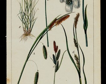 1833 Antique print of Cereals, grasses, green herbs, plants, hand colored engraving