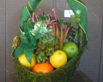 Lemon Lime  Orange Citrus Living Succulent Plant Basket