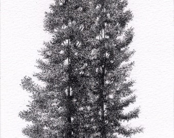 Trees Pencil Drawing