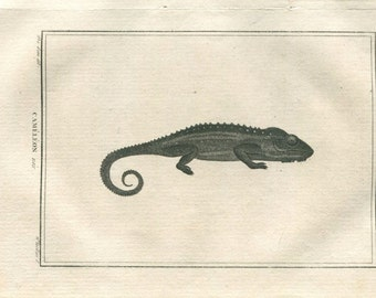 1802  Original Antique Print Black Chameleon from Buffon,  Drawing by De Seve, Engraved by Tardieu