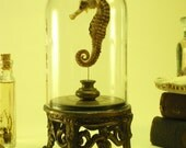 Seahorse Under Glass Dome On Antique Ornate Footed Metal Base