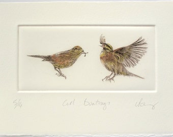 Drypoint birds. Cirl Bunting rare British farm bird. Endangered species