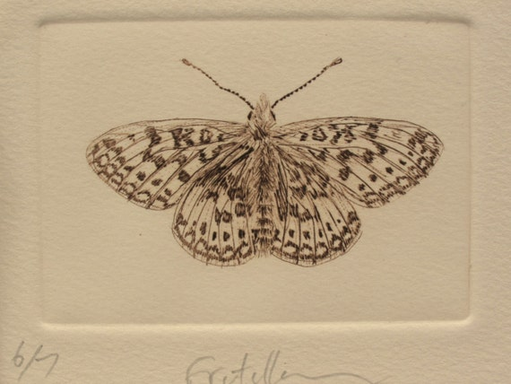 Brown fritillary butterfly small drypoint print on cream - Brown butterfly meaning money ...