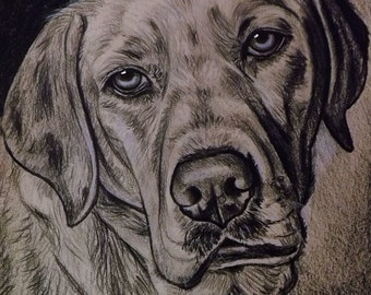 Labrador retriever portrait  mixed media on cardboard