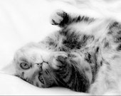 Black and White Sleepy Tabby Cat Feline Portrait Dreamy Cute Kitty Cat Cat Napping Fine Art Photography Print