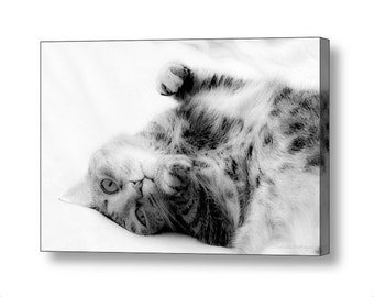 Black and White Cat Napping Sleepy Kitty Cat Dreamy Adorable Feline Fine Art Photography Giclee Gallery Wrap Canvas