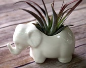 Elephant Planter- Air Plant Holder. Tiny ceramic elephant, perfect for air plant or little succulent! Handmade in Colorado from vintage mold