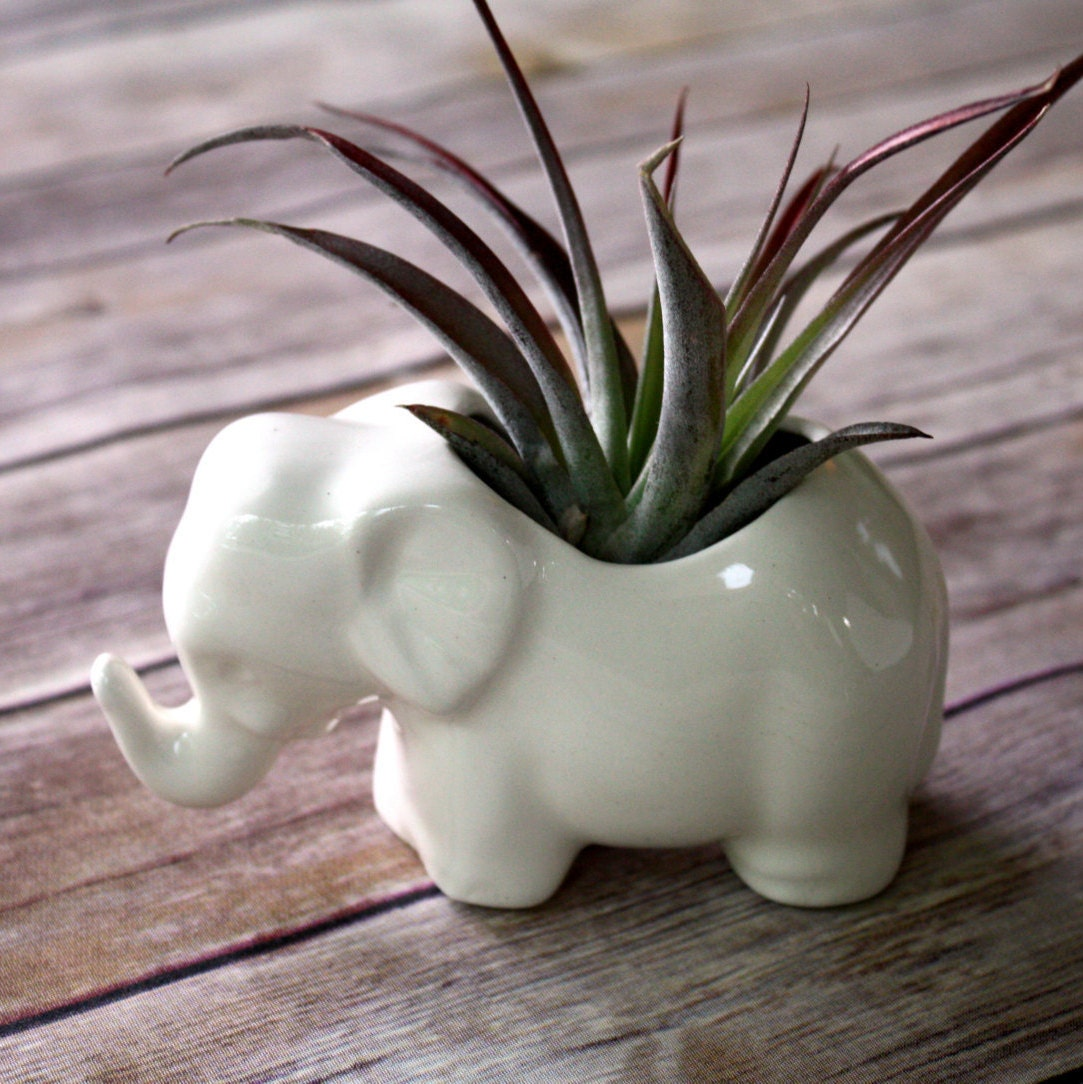 Elephant planter air plant holder tiny ceramic by for Air plant planters