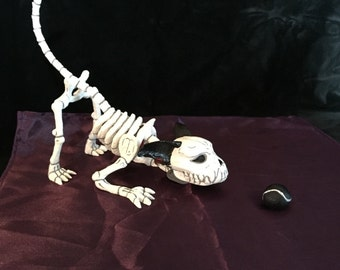 Fetch, Dog, Day of the Dead, Skeleton