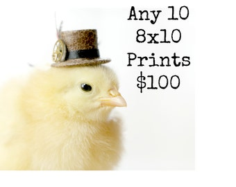 Chicks in Hats Chicken Photo Photographs Baby Animal Prints Any Ten (10) 8x10