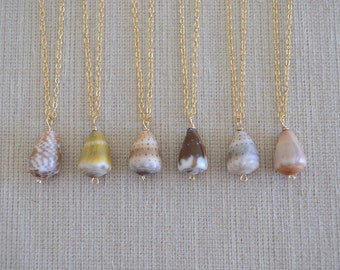 Small Hawaiian Cone Shell Necklace, Gold Filled Chain