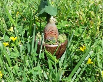 Mandrake Root (Crown)(Short Stem)