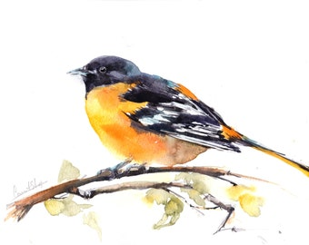 Original Watercolor Painting of Baltimore Oriole Bird, Yellow Bird Painting, Watercolour Art